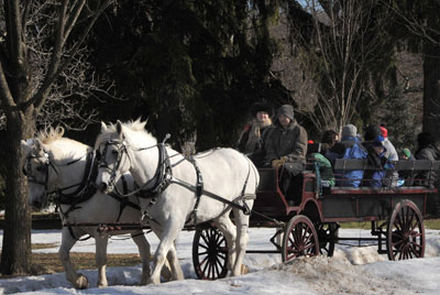 12 Passenger Horse Drawn Wagon
